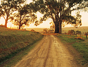 Eucalyptus Tree Prints - Country Road Near Mansfield, Victoria, Australia Print by Peter Walton Photography