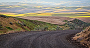 Country Dirt Roads Prints - Country Road Print by Steve McKinzie