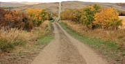 Barbed Wire Fences Prints - Country Road to Nowhere Print by Jim Sauchyn