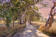 Paddocks Prints - Country Roads II Print by Mark Richards