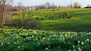 Farm Photos - Country Spring by Bill  Wakeley