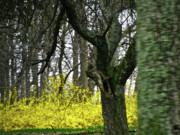 Country Spring Forest Print by Debra     Vatalaro