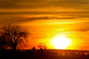 Sunset Greeting Cards Posters - Country Sunrise 1-27-11 Poster by James Bo Insogna