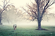 Grazing Horse Posters - Country Sunrise Poster by Scott Pellegrin