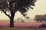 Farm Photo Prints - Countrylife Print by Aimelle
