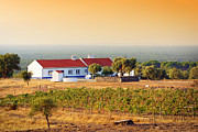 Vineyard Landscape Prints - Countryside House Print by Carlos Caetano