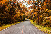 Mongkol Chakritthakool Metal Prints - Countryside Road In Autumn Metal Print by Mongkol Chakritthakool