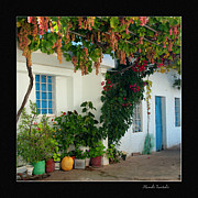 Blue Grapes Photos - Courtyard with hanging grapes by Manolis Tsantakis