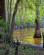 Cove At Caddo Lake Print by Gayle Johnson