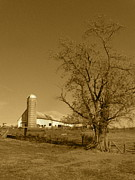 Farming Barns Prints - Cow Barn Print by JD Grimes