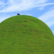 Black Art - Cow Eating On Round Top Hill by Mike McGlothlen