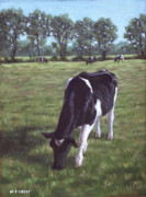 Friesian Paintings - Cow in field at Throop UK  by Martin Davey