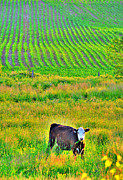 Country Scenes Framed Prints - Cow In Line Framed Print by Emily Stauring