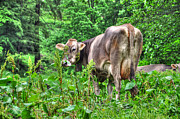 Cow Bell Posters - Cow in the green forest Poster by Mats Silvan