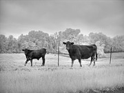 Linders Prints - Cow  Print by Jane Linders