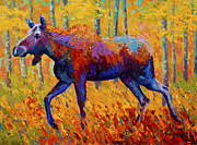 Marion Rose Art - Cow Moose by Marion Rose