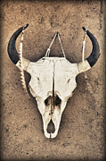 Pueblo De Taos Acrylic Prints - Cow Skull Acrylic Print by Bryan Mullennix