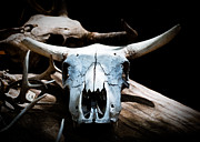 Nikon D80 Prints - Cow Skull in Shade Print by Sonja Quintero