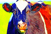 Farm Animals Digital Art Posters - Cow Stare . Photoart Poster by Wingsdomain Art and Photography