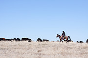 Black Angus Photo Posters - Cowboy and Cattle Poster by Cindy Singleton