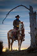 Humans Posters - Cowboy Under Tree Poster by Inge Johnsson
