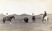 1880s Candid Framed Prints - Cowboys, Roping A Buffalo Framed Print by Everett