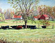 Canadian Painting Framed Prints - Cows grazing in one field  Framed Print by Richard T Pranke