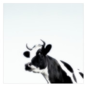 Landscapes Artwork Digital Art Posters - Cows landscape photograph II Poster by Marco Hietberg