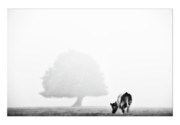 Black And White Photographs Metal Prints - Cows landscape photograph IV Metal Print by Marco Hietberg