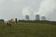 Power Plants Prints - Cows Near Sellafield, One Print by Karen Kasmauski