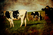 Cows Art - Cows on a Hill 2 . texture by Wingsdomain Art and Photography