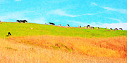 Marin County Digital Art Prints - Cows On A Hill . 40D3430 . Painterly . Long Cut Print by Wingsdomain Art and Photography