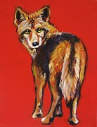 Coyote Art Paintings - Coyote Looking Back by Carol Suzanne Niebuhr