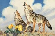 Animal Portraits Prints - Coyotes Howl To The Setting Sun Print by Walter A. Weber
