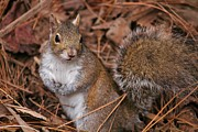 Alexander Spahn - Cozy Squirrel