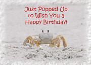 Judy Hall-Folde - Crab Happy Birthday