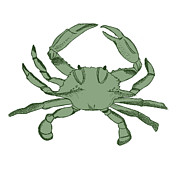 Mod Drawings - Crab by Jessica Rost