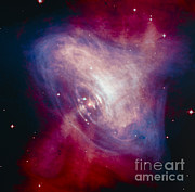 Crab Nebula Prints - Crab Nebula Print by NASA / Science Source