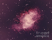 Dead Star Posters - Crab Nebula Poster by Science Source