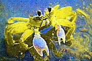 Featured Paintings - Crabby and Cute by Deborah MacQuarrie