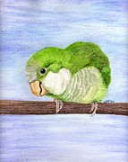Monk Parakeet Painting Prints - Crackers Print by Laurilee Taylor