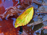 Fine Photography Art Photos - Cradled Leaf by Juergen Roth