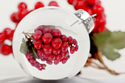 Cranberry Framed Prints - Cranberries in Globe Framed Print by Lori Foernzler