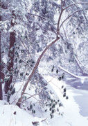 Mountain Stream Photo Posters - Cranberry River Deep Snow Poster by Thomas R Fletcher
