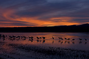 Hector D Astorga - Crane Ponds at Sunset