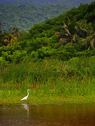 Tayrona Prints - Crane Print by Skip Hunt