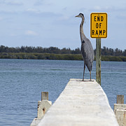 Boat Ramp Framed Prints - Crane Standing on a Boat Ramp Framed Print by Skip Nall