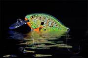 Lure Art - Crank Bait I by Tom Mc Nemar