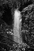 Green Movement Metal Prints - Cranny Falls waterfall Carnlough county antrim northern ireland uk Metal Print by Joe Fox