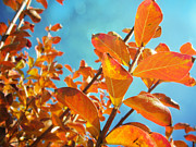 Crape Prints - Crape Myrtle In Fall Print by Traci Lehman